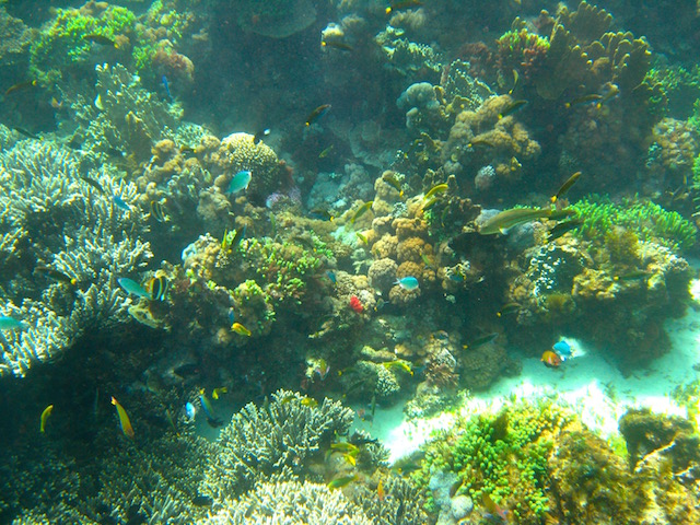 Snorkelling in the lagoon, Lord Howe Island