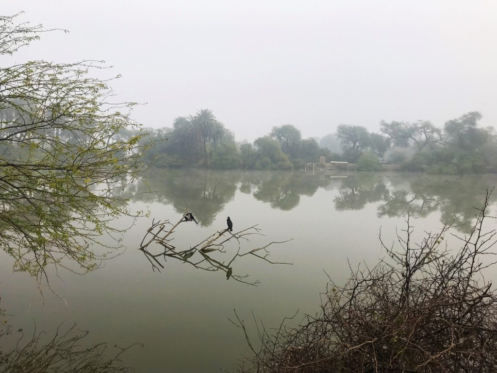 Misty Morning at the Keoladeo National Park World Heritage Site in Rajasthan