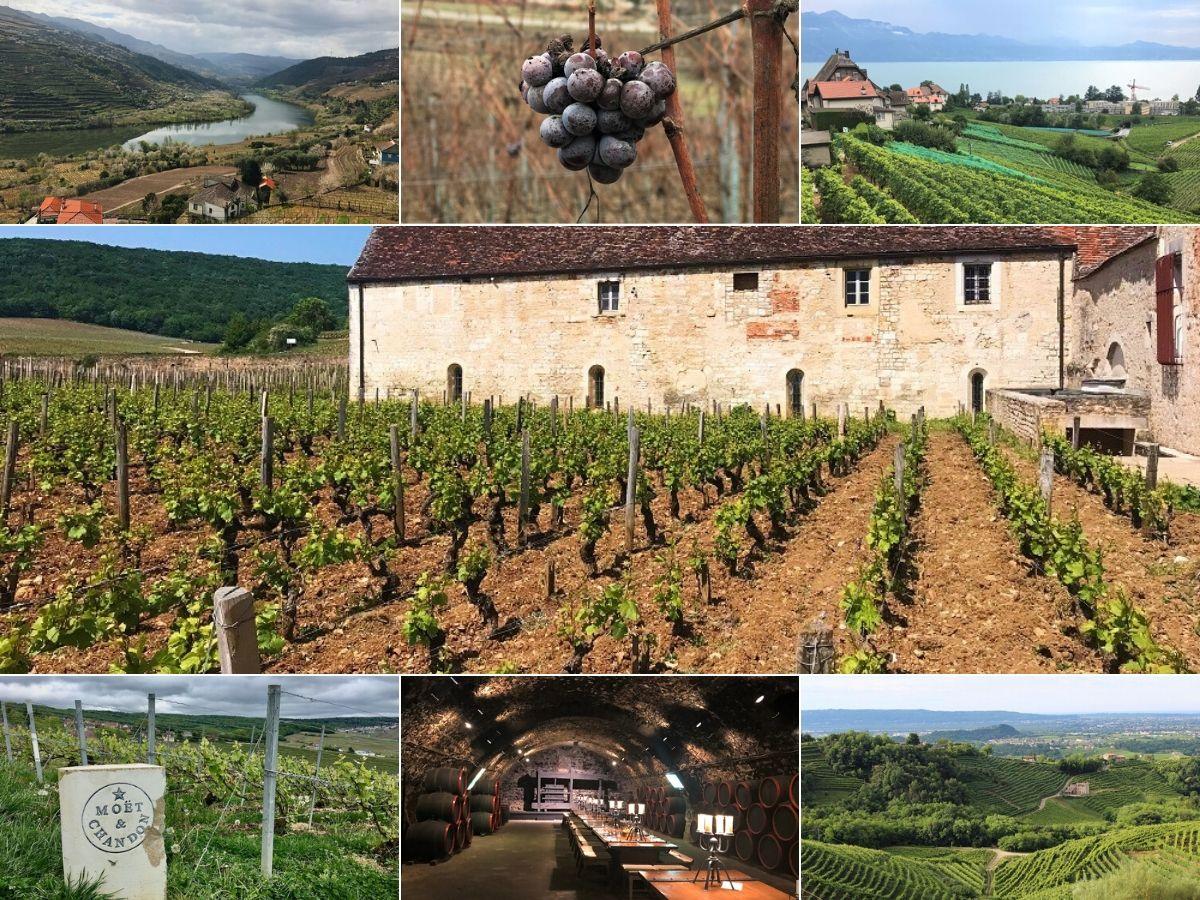 World Heritage Vineyards 1200x900